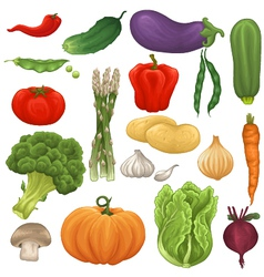 collection isolated vegetables vector image