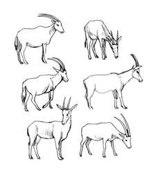 Set antelopes vector