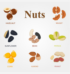 set of eight different types nuts on a white vector image