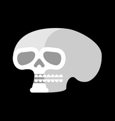 skull isolated head of human skeleton anatomy vector image