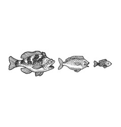 three fish try swallow each other sketch vector image