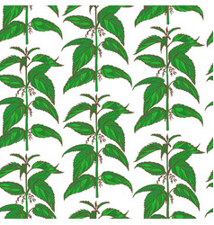 hand drawn colored nettle background vector image vector image