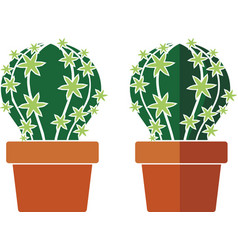 cactus in a pot vector image