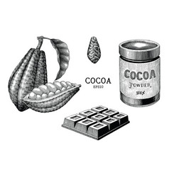 cocoa plant and product hand draw vintage vector image
