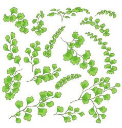 green fern leaves sketch vector image vector image