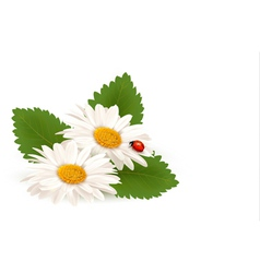 Nature summer daisy flower with ladybug vector image vector image