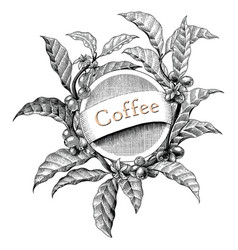 coffee frame hand drawing vintage engraving logo vector image