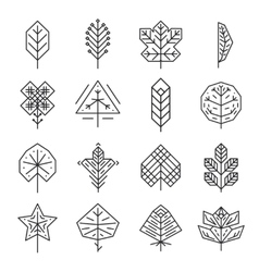 Hipster geometric thin line leaves for logos and vector