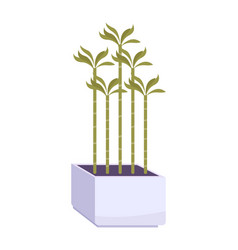 house plant vector image