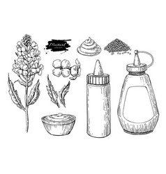mustardi sauce set drawing hand drawn vector image