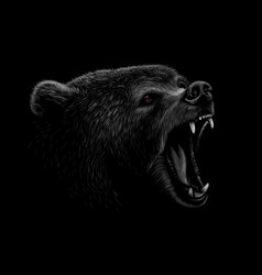 Portrait of a brown bear head on a black vector