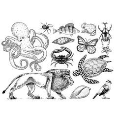 set animals reptile and amphibian mammal and vector image