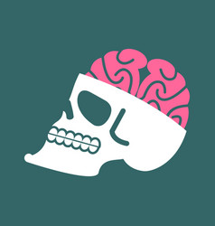 Skull with brains isolated head human skeleton vector