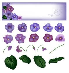 flower violet set vector image