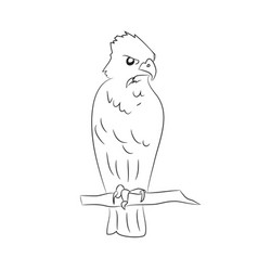 eagle sits lines vector image