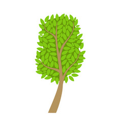tree with an oval crown and green leaves element vector image vector image