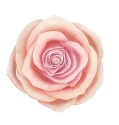 Beautiful pink rose floral decorative vector
