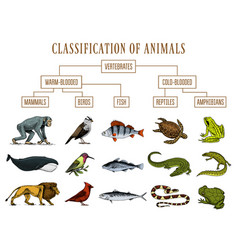 classification animals reptiles amphibians vector image