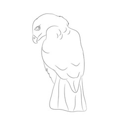 Eagle sits lines vector