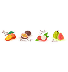 Exotic fruits in line mango passionfruit lychee vector