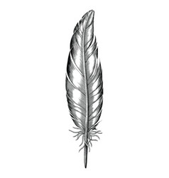Feather of duck hand draw vintage engraving style vector