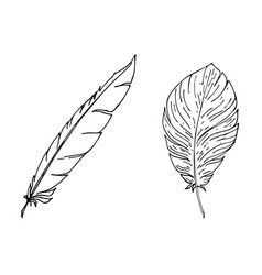 hand drawn two feathers in line art style vector image