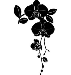 orchids flowers it is isolated vector image