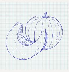 pumpkin hand drawn sketch on notebook sheet vector image