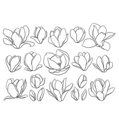 set blooming magnolia buds in black color vector image