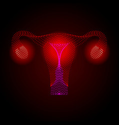 uterus with ovary cervix fallopian tubes vector image