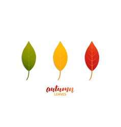 autumn leaves leaves of trendy fall colors vector image