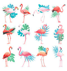 Flamingo tropical pink flamingos and exotic vector