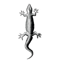 gecko hand drawing vintage style vector image