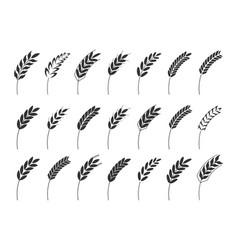 Grain cereal spike icon shape black vector