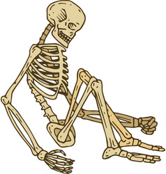 Isolated sitting skeleton vector