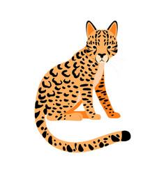 Orange cheetah on a white vector