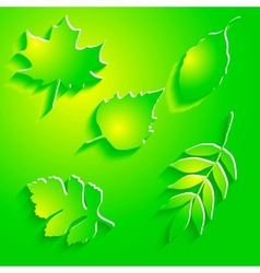 Abstract Maple Leaf on White Background vector image
