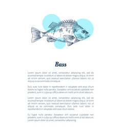 Bass or bream marine creature hand drawn poster vector