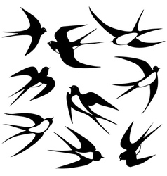 Bird swallow set poses vector image