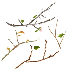 Branch various sprigs twig tree and bush vector