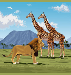 color scene african landscape with lion and pair vector image