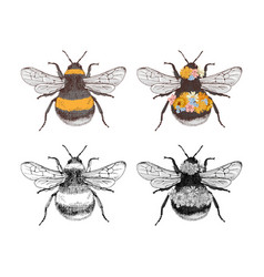 hand drawn collection 4 bumblebees vector image