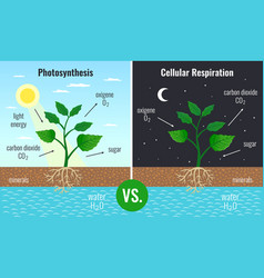 Photosynthesis educational posters set vector