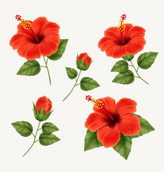 set realistic beautiful hibiscus flower vector image