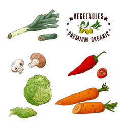 vegetable element of leek mushroom chilli vector image