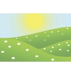Summer camomiles field vector image
