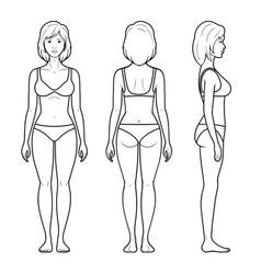 A female figure vector