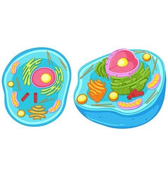 Animal cell in closer look vector image