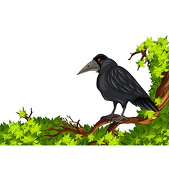 Crow standing on branch vector