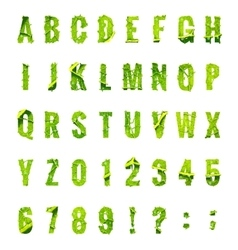 Green leaf lettuce alphabet EPS 10 vector image